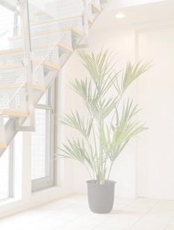 リアル観葉植物 オフィス設置例